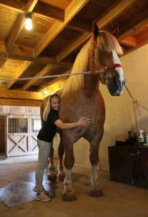 実在した巨大生物・天井に届きそうな馬