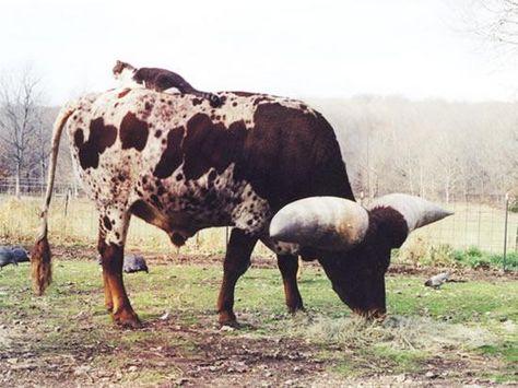 実在した巨大生物・角の大きな牛